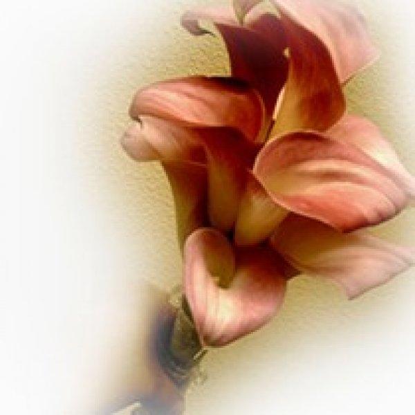 wiazanka-slubna-kwiat
